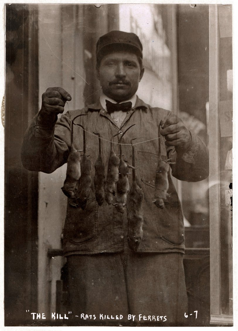 The Rat Collector:  1908