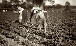 Beet Hoers: 1915