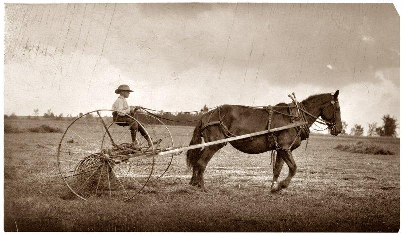 Jack on Hay Rake: 1915
