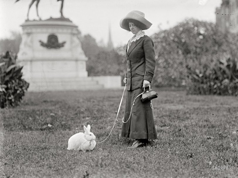 Washington Rabbit: 1911