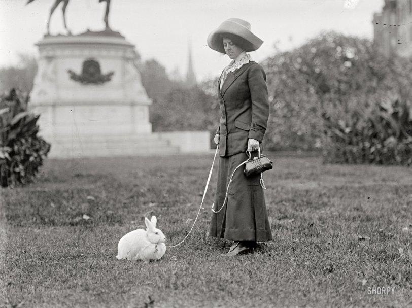 Washington Rabbit: 1911