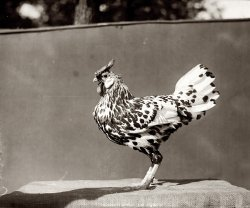 Maryland Chicken: 1920