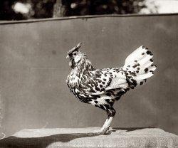 Maryland Chicken: 1920