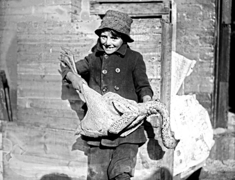 Thanksgiving Turkey: 1919