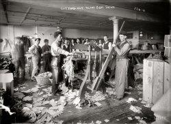 Teddy Bear Skins: 1908