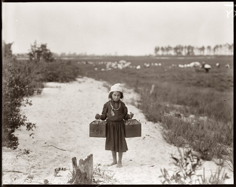 Rose Biodo, Cranberry Carrier: 1910