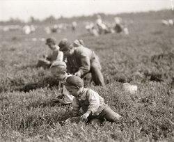 White's Bog: 1910