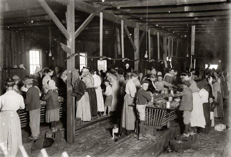 Biloxi Shrimps: 1911