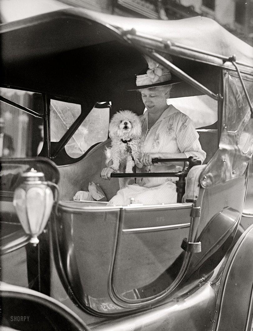 Diplomatic Pooch: 1915