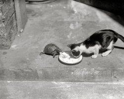 Shel and Jez: 1922