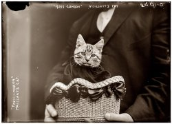 Paree the Flying Cat: 1910