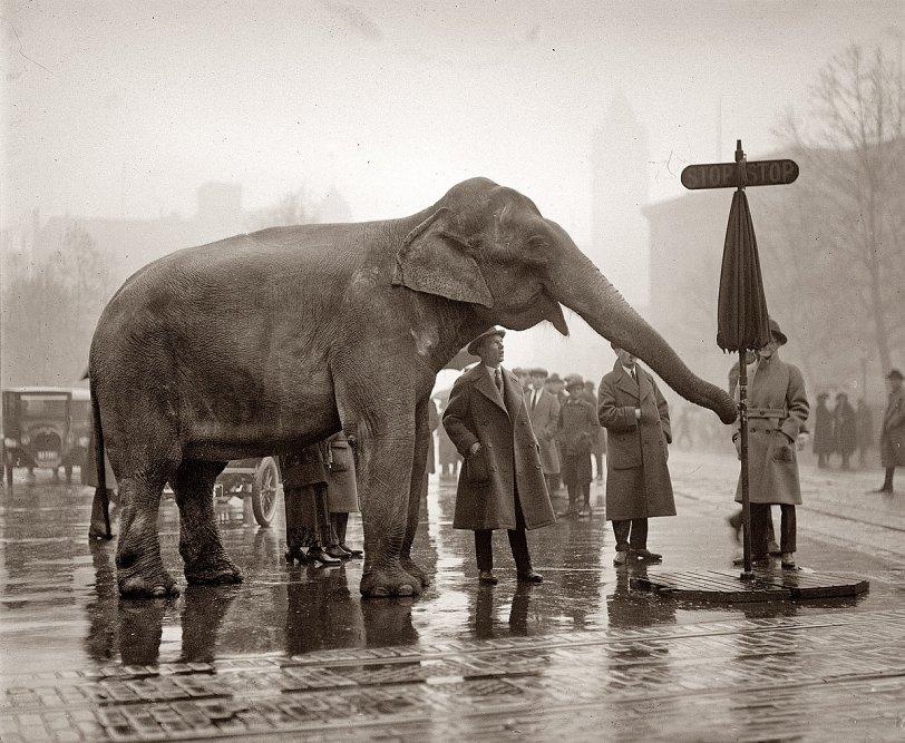 Urban Elephant: 1923