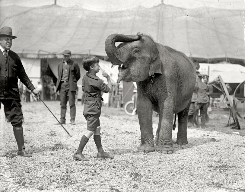 Teddy and the Elephant: 1924