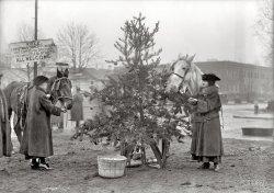 Christmas Dinner for Horses: 1918