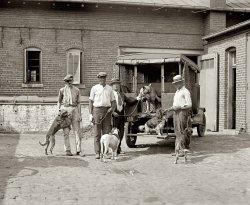 Animal Control: 1924