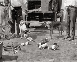 Pup Roundup: 1924