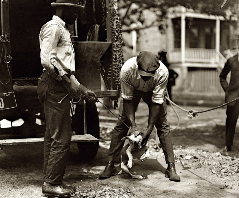 D.C. Dog Catcher: 1924