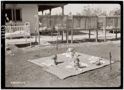 Free-Range Babies: 1946