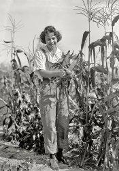 Farmerette: 1919