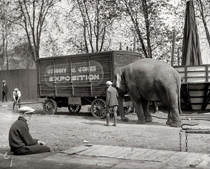 Nelliephant: 1925