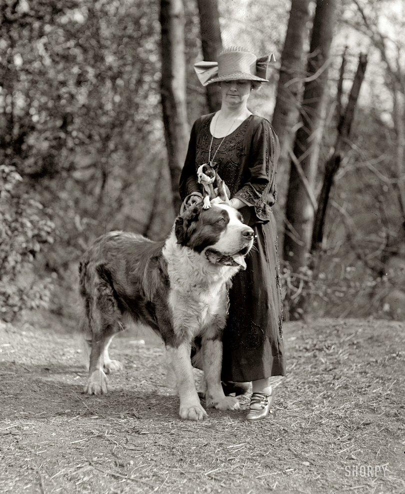 Head Puppy: 1925