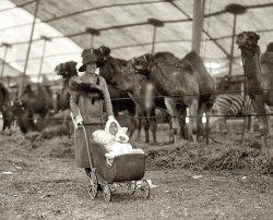 Circus Baby: 1926