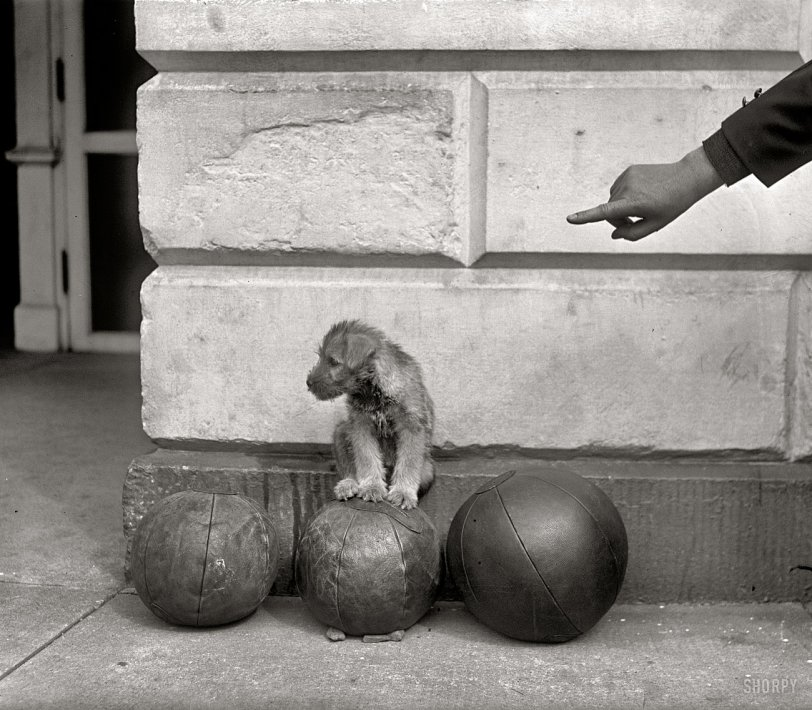 White House Dog: 1926