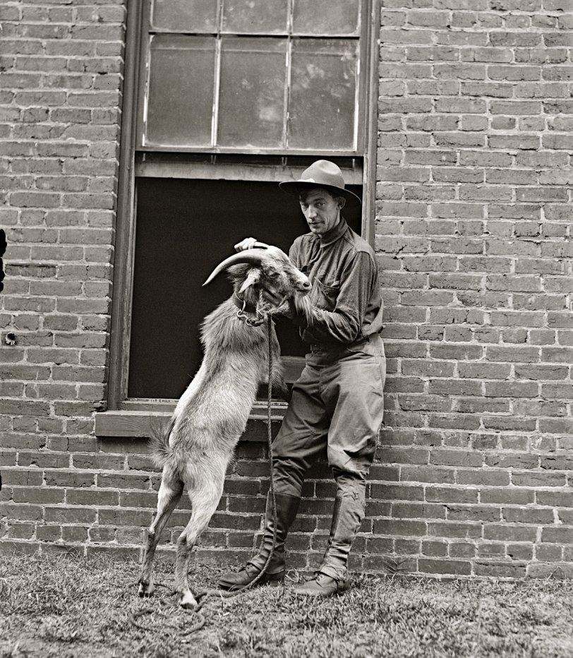 Billy, Goat: 1929
