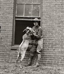 Billy, Goat: 1929