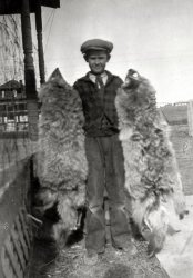 1927 - Coyote Ugly