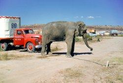 Sad Life of a Circus Elephant: 1957