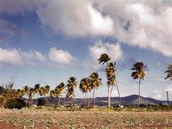 Island Palms: 1941