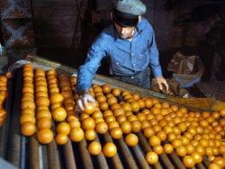 Orange and Blue: 1943