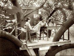 Avant-Garden: 1921