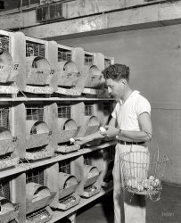 I Am the Egg Man: 1938