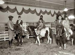 My Little Pony: 1924