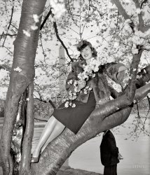 Signs of Spring: 1939