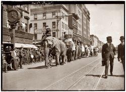 Elephant Walk: 1920
