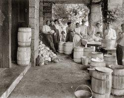 Liberty Cabbage: 1918