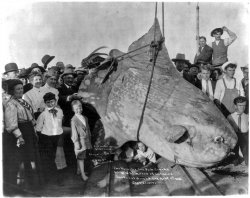 Monster Fish: 1910