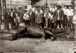 Overheated Horse: 1910