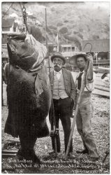 Black Sea Bass: 1900