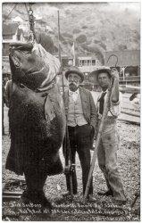 Black Sea Bass: 1900