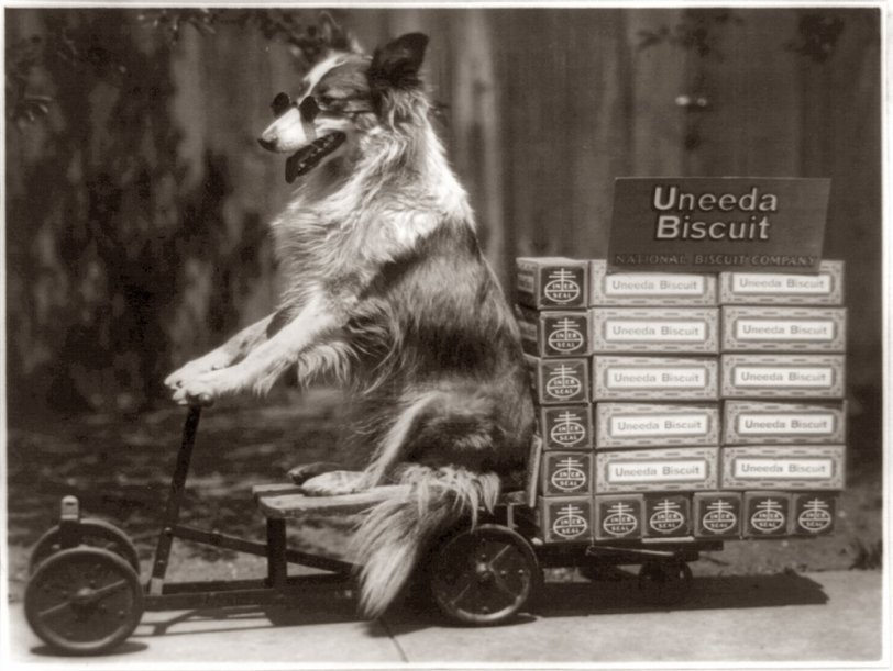 Biscuit Dog: 1916