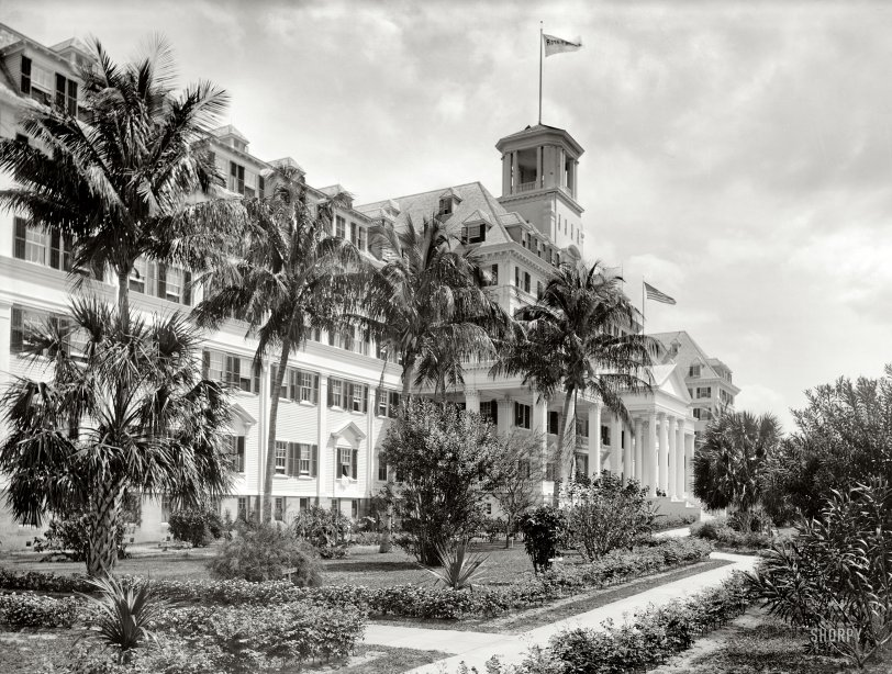 Royal Poinciana: 1900