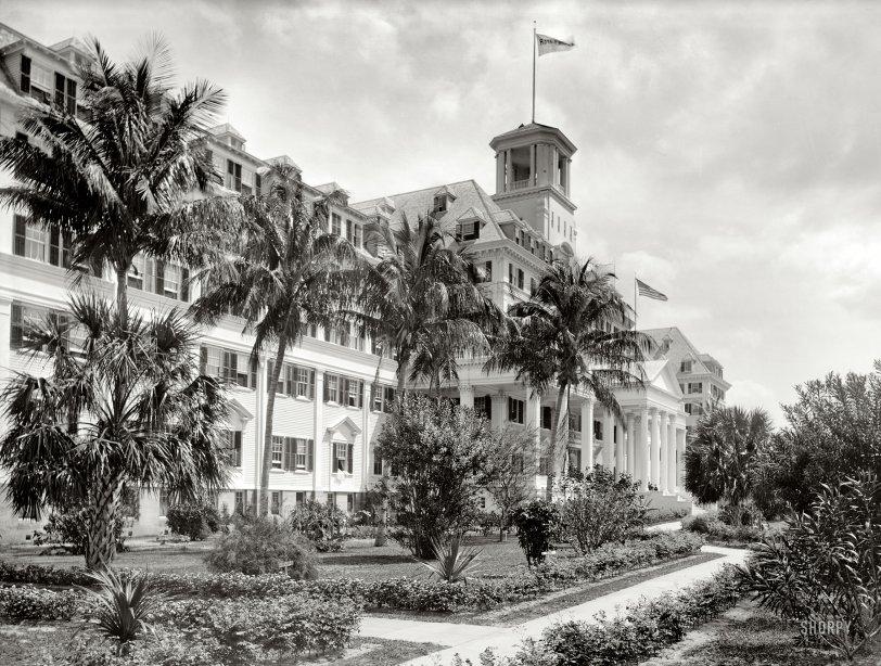 Royal Poinciana: 1900