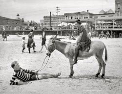 Beach Burro: 1905