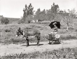 Married Life: 1904