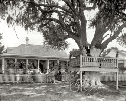 Harry's Villa: 1901