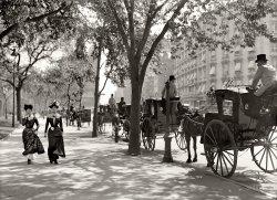 Hansom Fillies: 1900